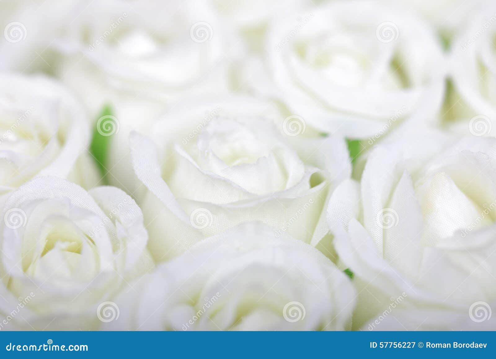 White roses background rose flowers flower wedding closeup fresh isolated bouquet luxury nature beauty bunch cream bridal bride