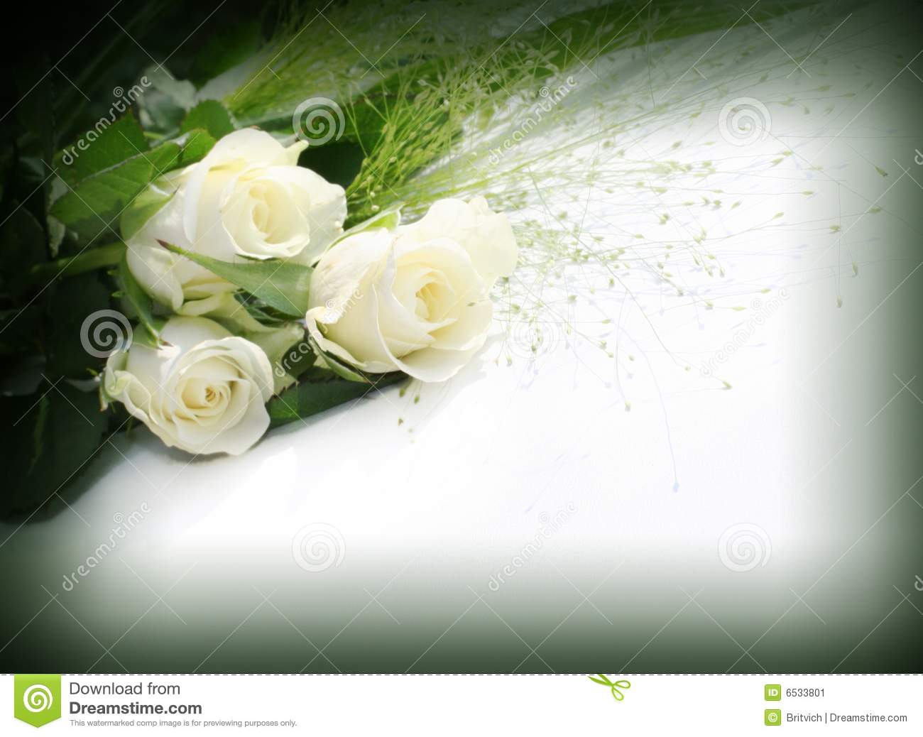 White roses over white background - perfect isolated for your text.