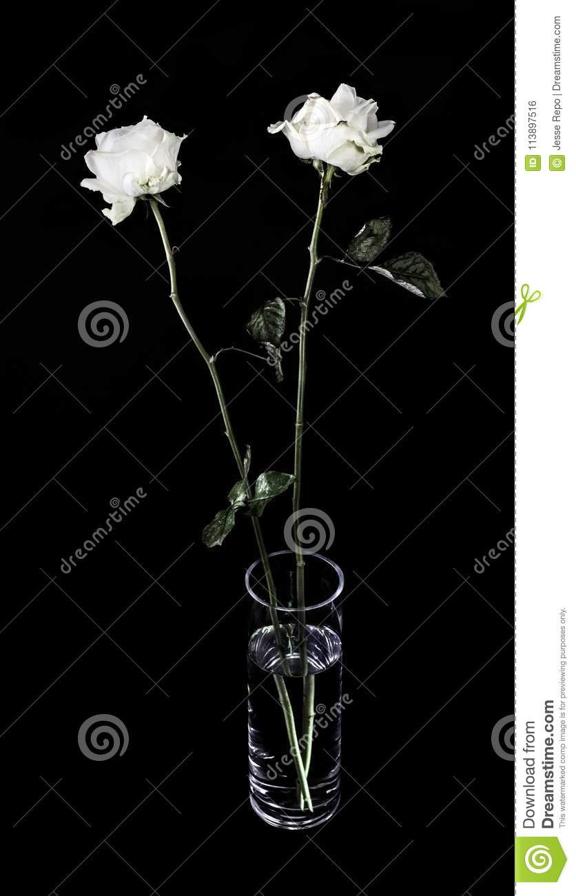 White Roses In A Glass Vase Stock Photo Image Of White Death