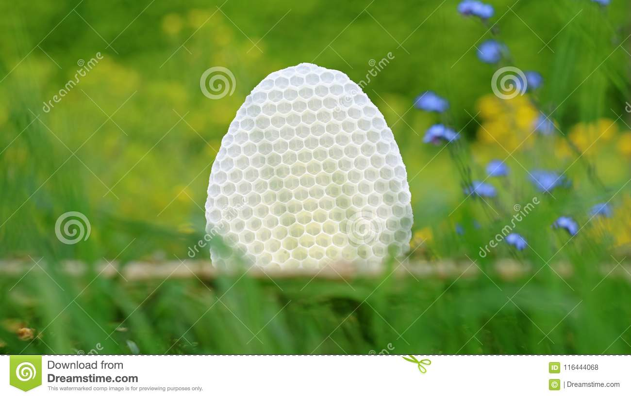 White round honeycomb in green grass with blue and yellow flowers download white round honeycomb in green grass with blue and yellow flowers background stock photo mightylinksfo