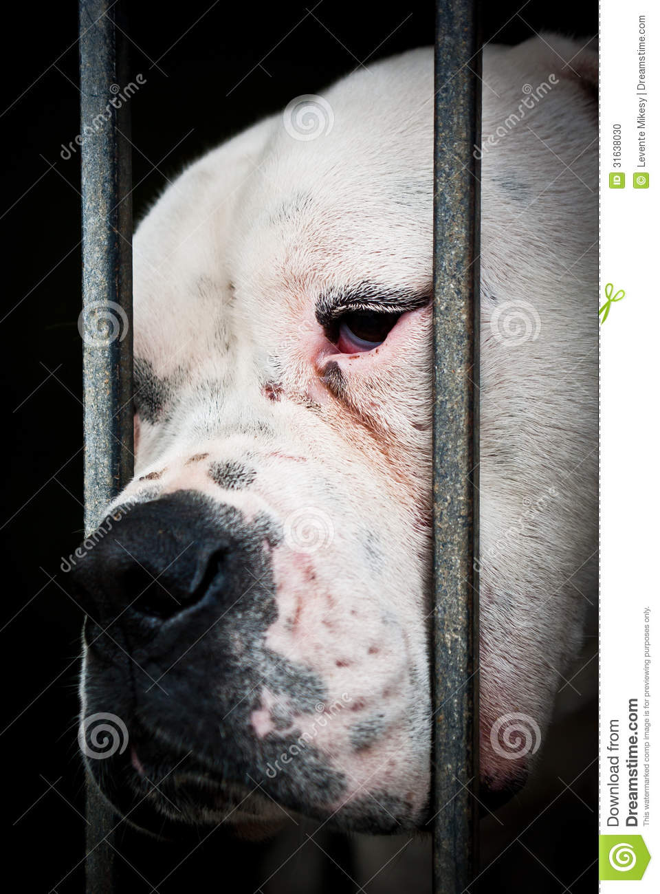 White and sad dog behind grids