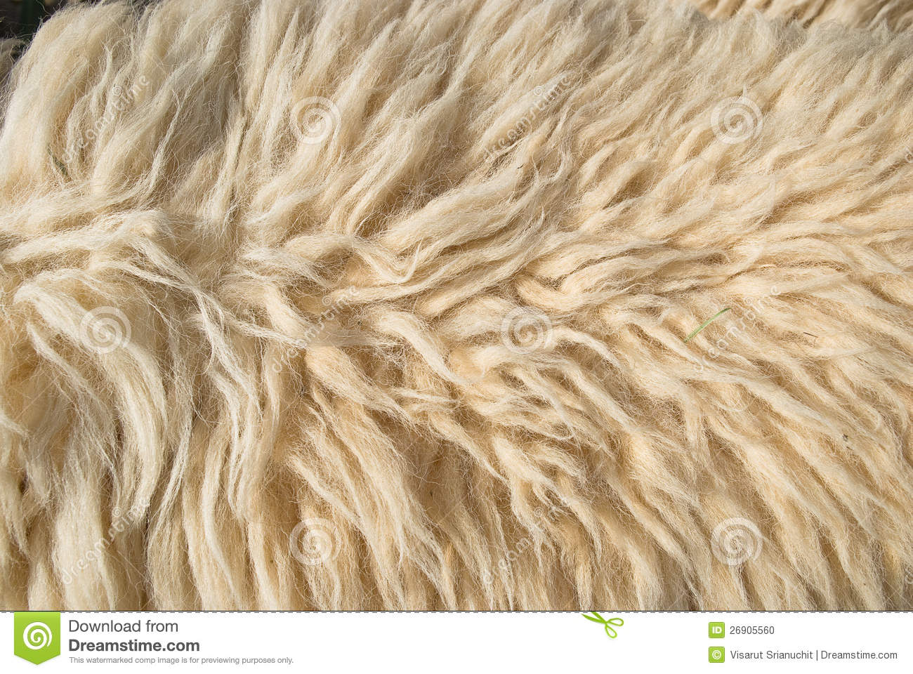 White Sheep Wool Stock Photo Image 26905560