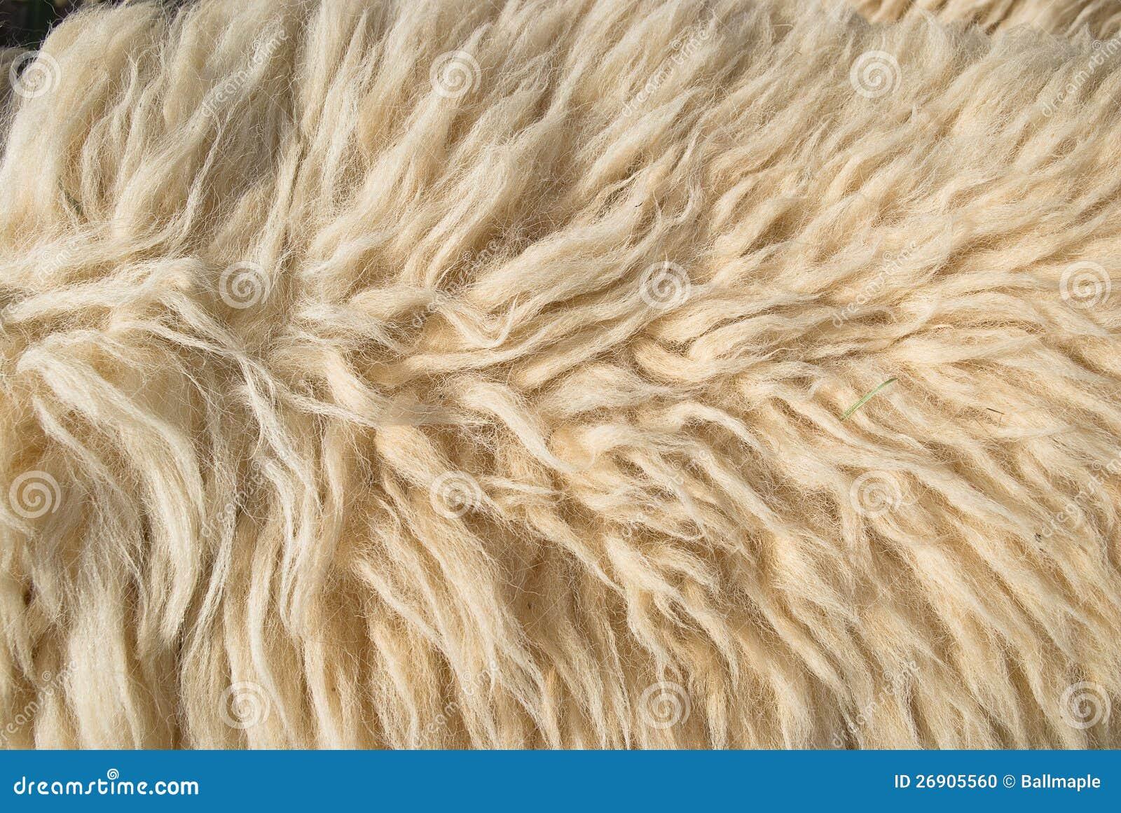 Sheep Wool Texture Www Pixshark Com Images Galleries