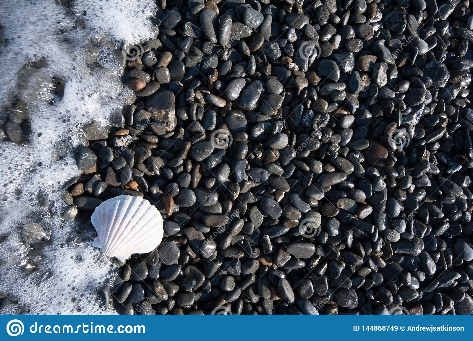 A white shell on a black pebble beach with waves