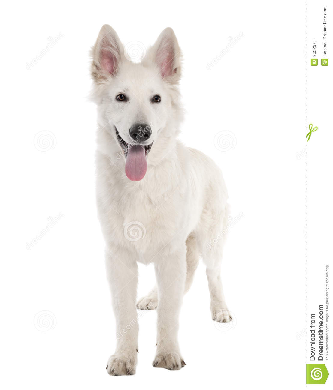 Boy Dog Names For White Dogs