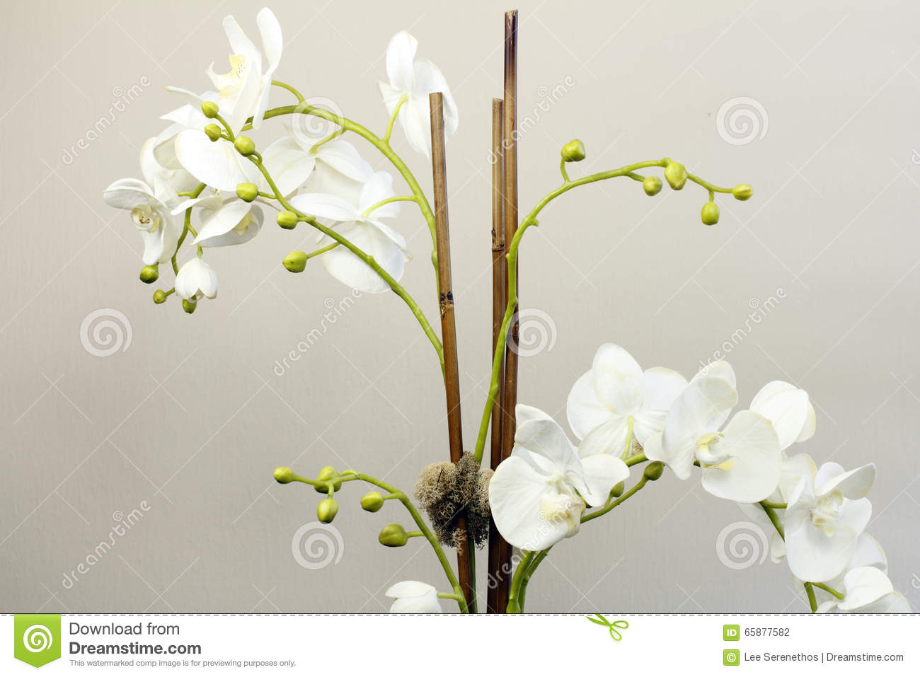 White silk orchid flowers plant stock photo image 65877582 artificial buds flowers green orchids dhlflorist Gallery