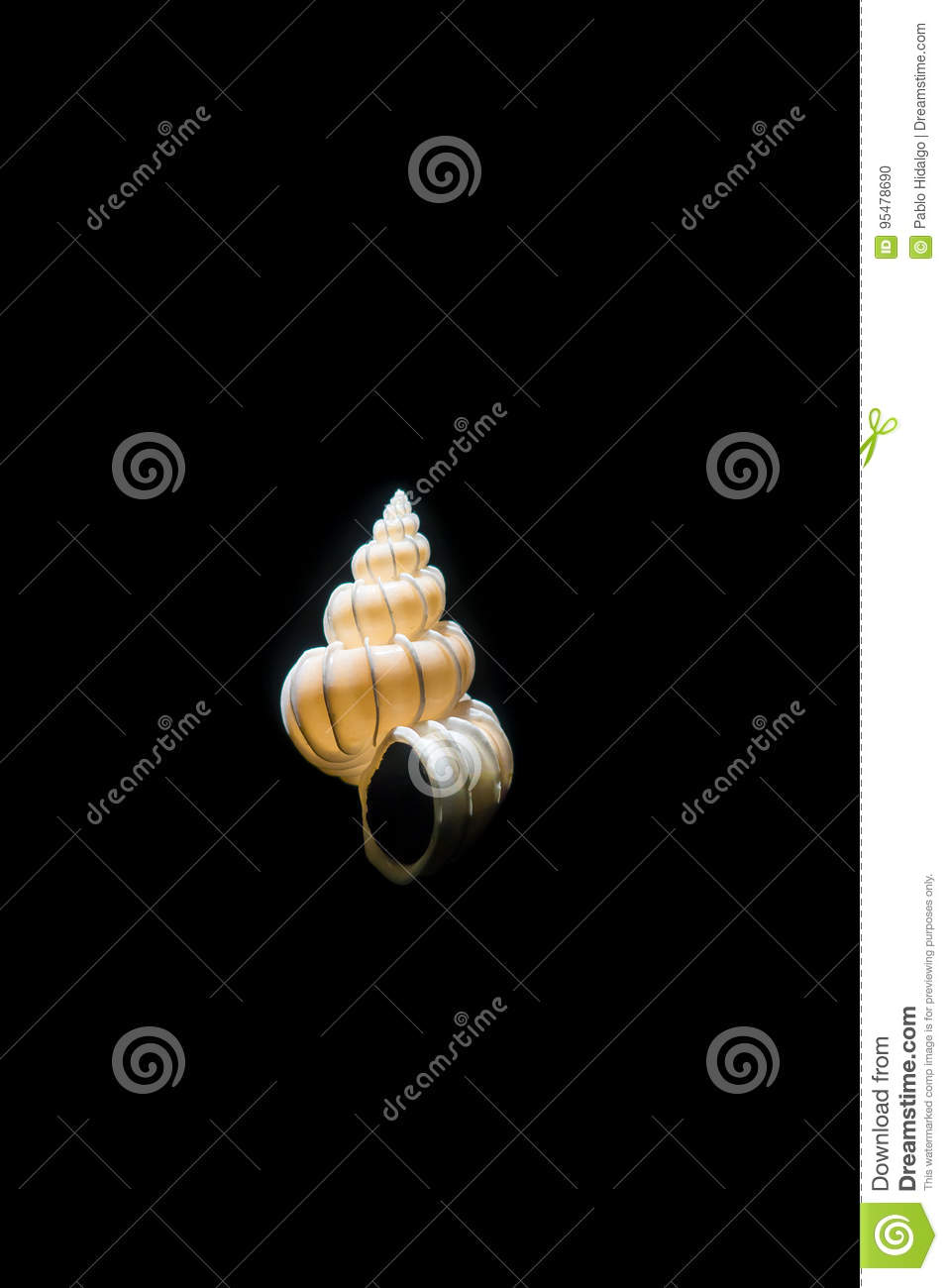 White Snail Shell At National Museum Of Natural Science In Orlando - Black museums in usa