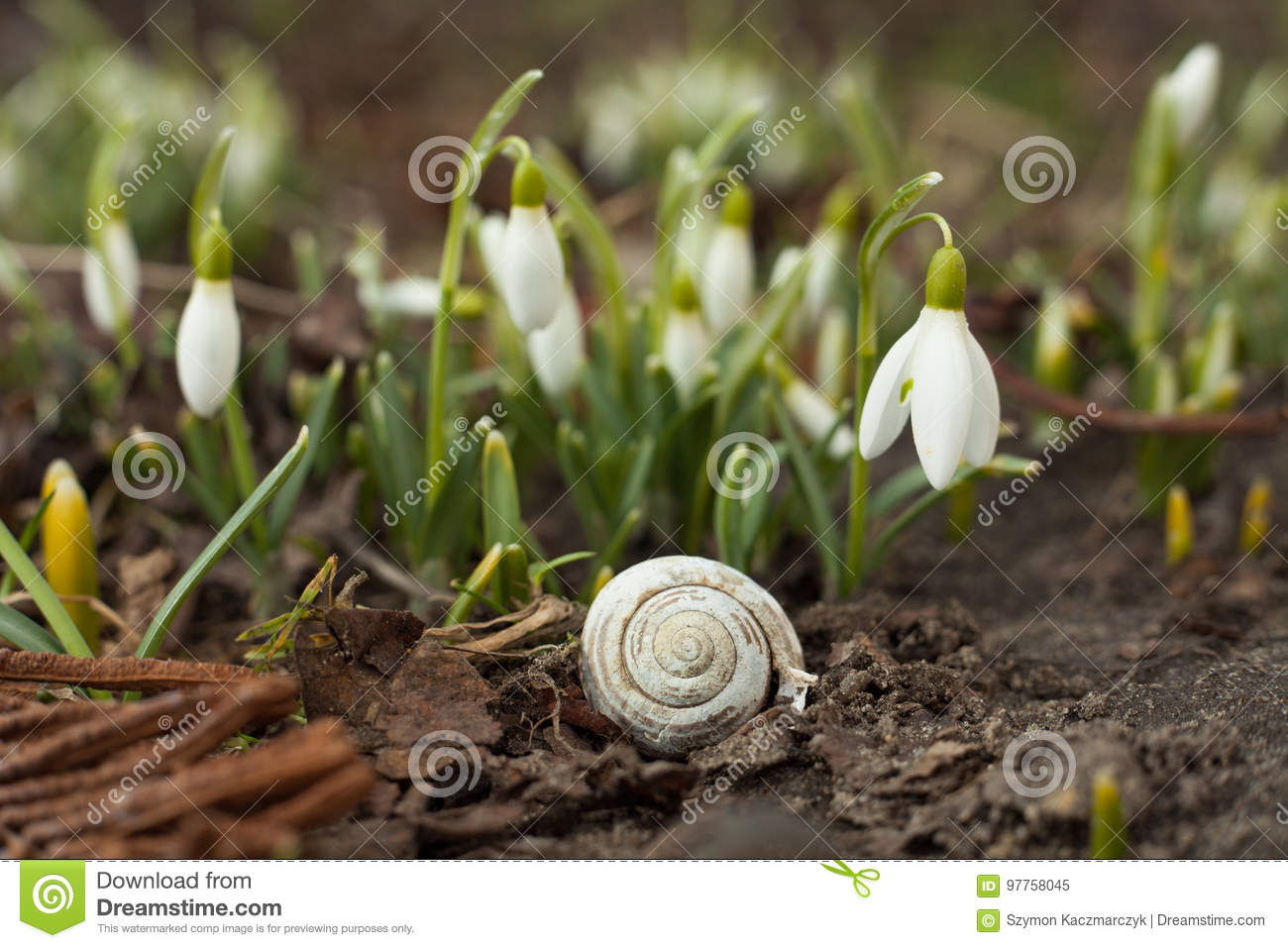 White snowdrop bell and empty snail shell stock image image of white snowdrop bell and empty snail shell mightylinksfo