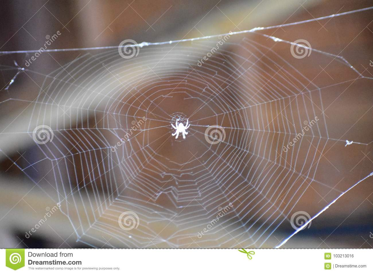 Oh What A Tangled Web We Weave Stock Photo