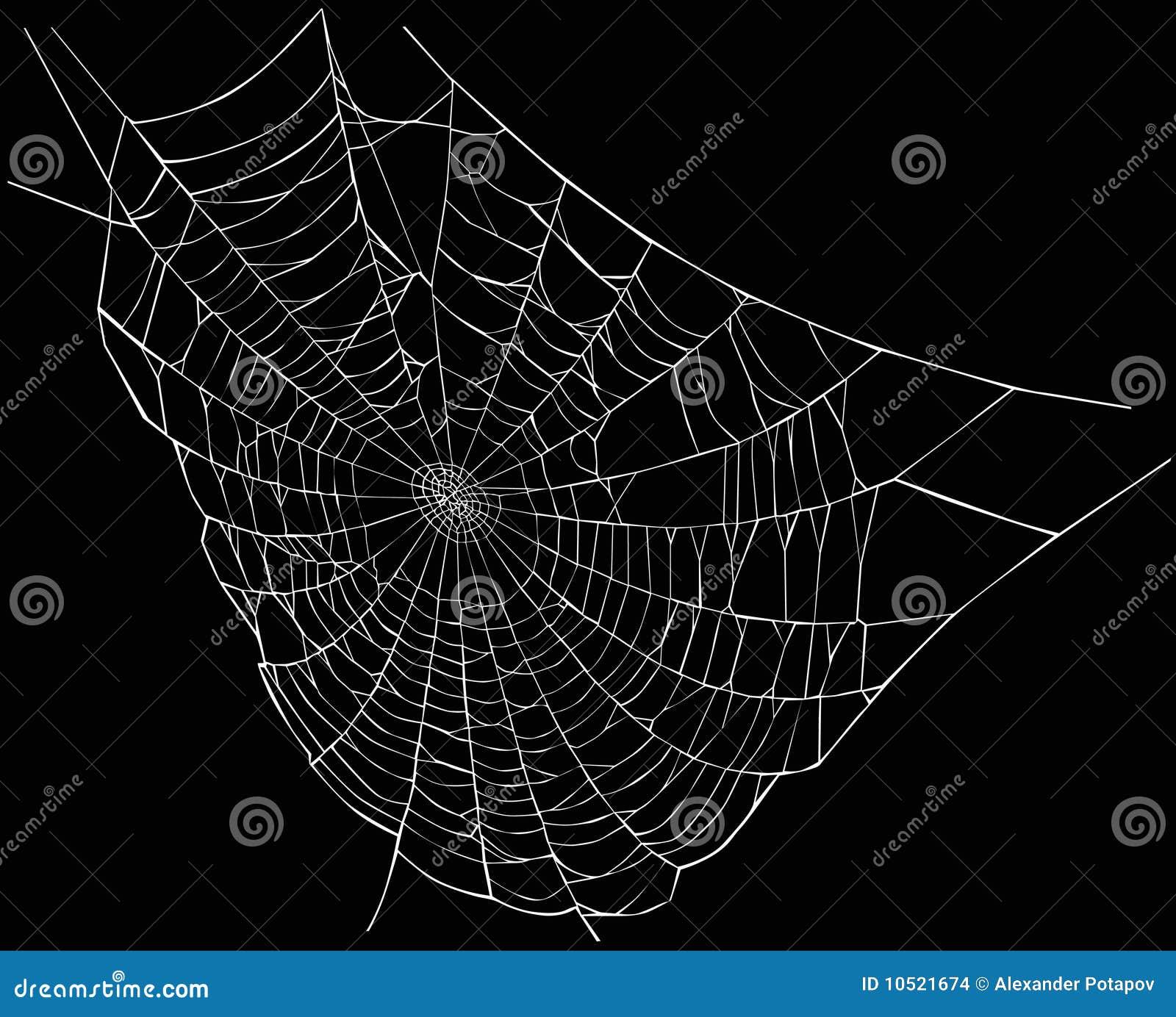 White Spider Web Stock Illustration Illustration Of