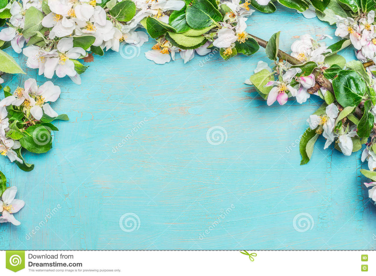 White Spring blossom on blue turquoise wooden background, top view, border. Springtime