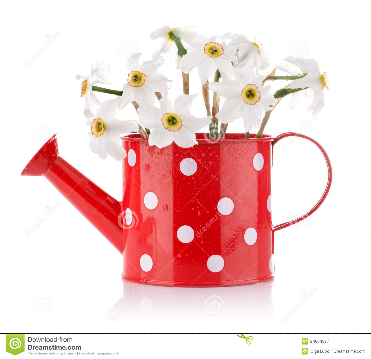 White Spring Flowers In Red Vase Stock Image Image Of Inside