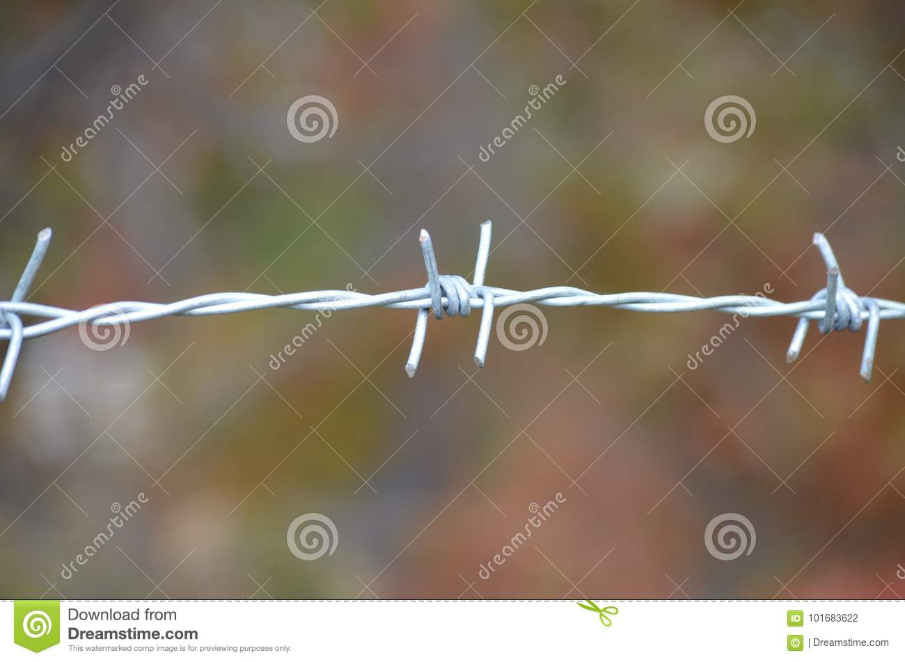 Item Barbed Wire Closeup On The Blurry Background Of The Yard Stock ...