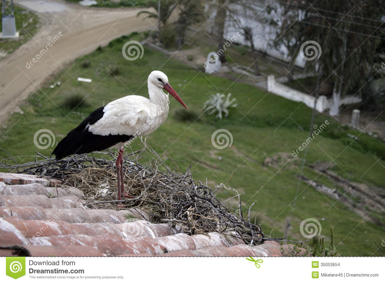 white bird catholic singles One of our most popular birds,  whitish to pale bluish or greenish white, marked with brown, purple, and gray incubation is almost always by female alone,.