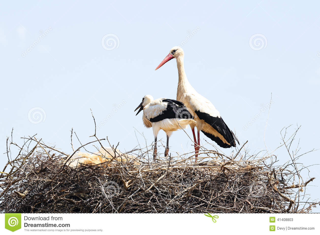 White stork with her baby in spring