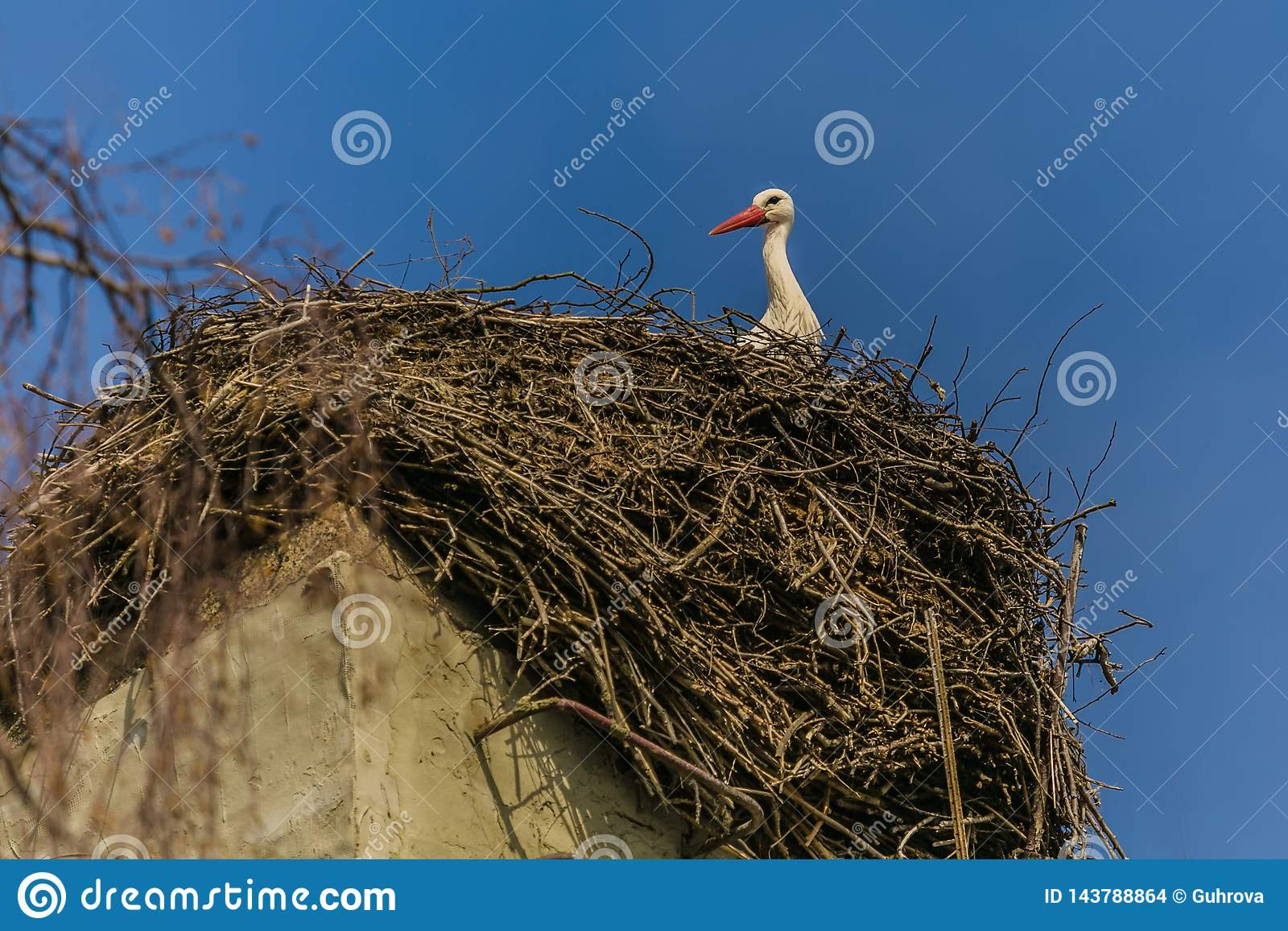 A white stork with red beak sitting on nest