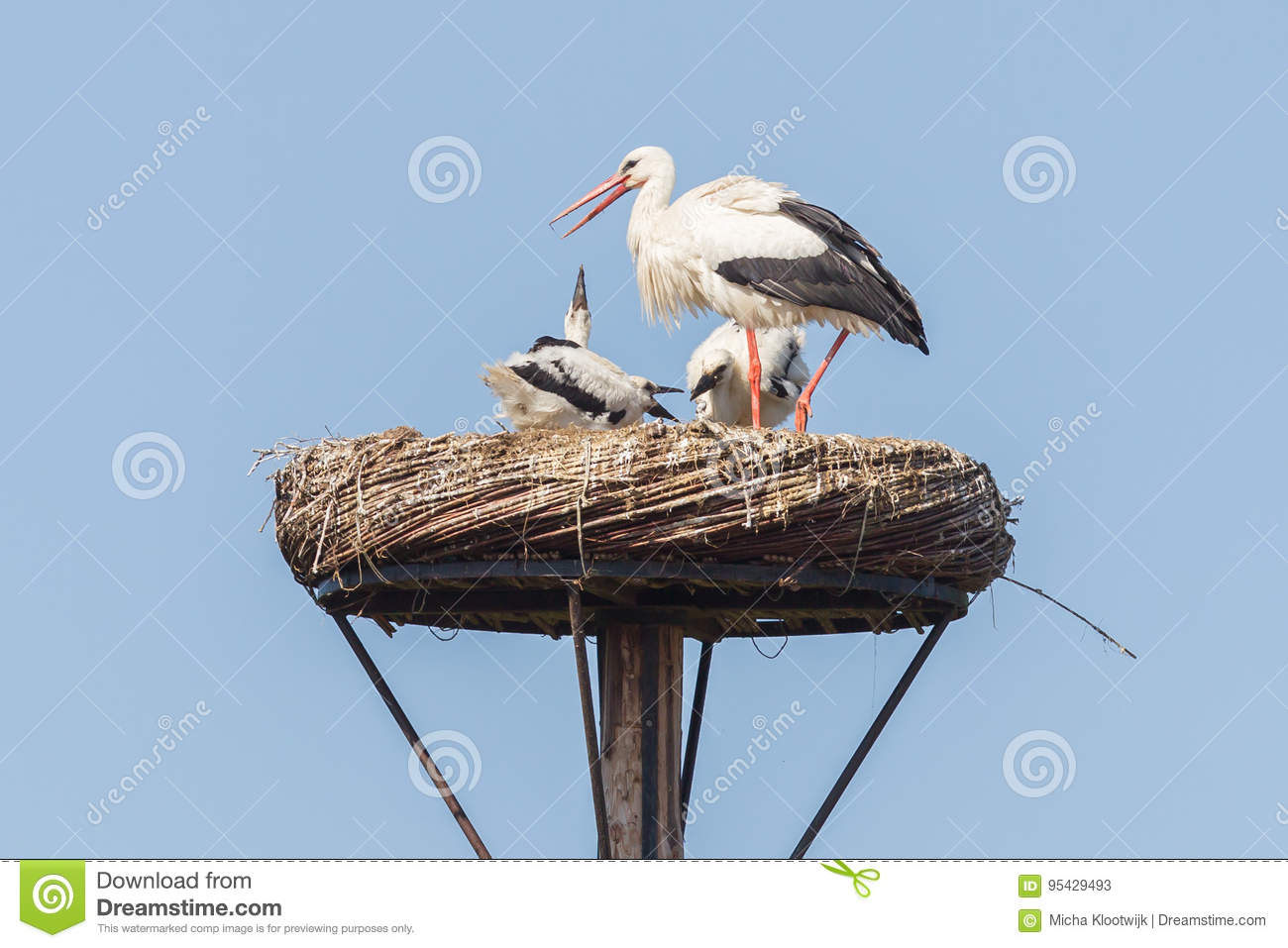 White stork sitting on a nest