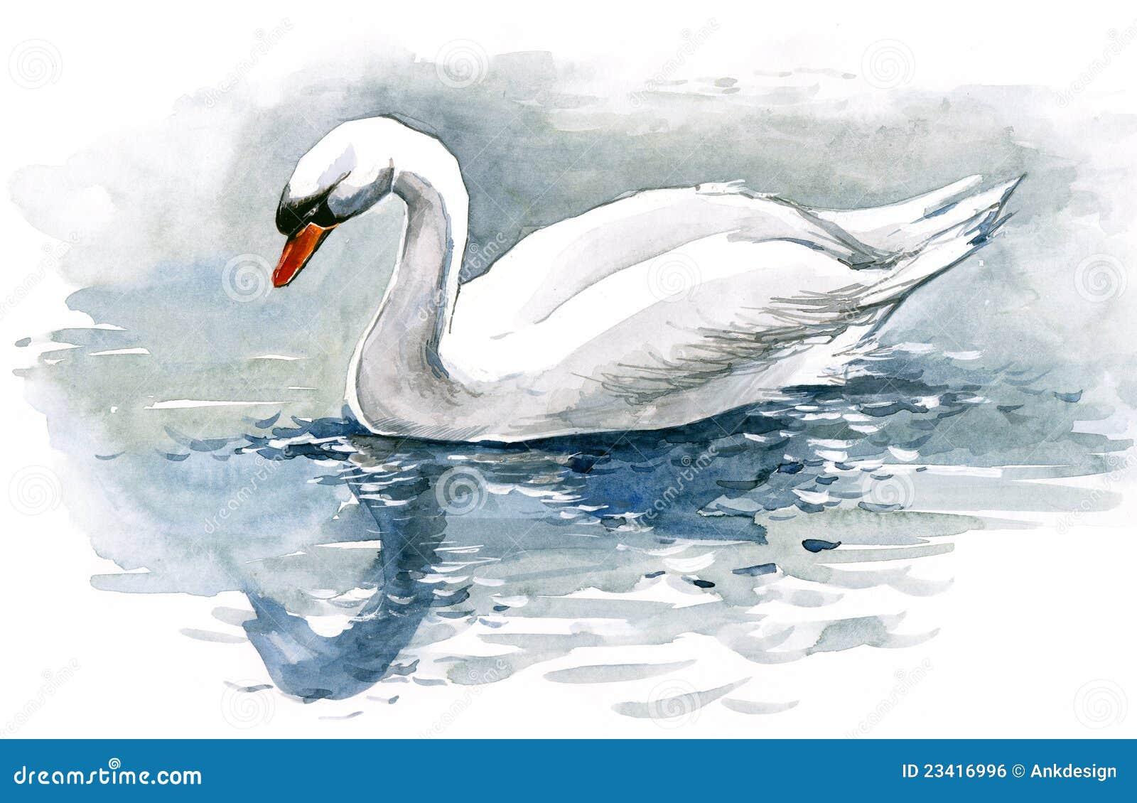white swan royalty free stock image image 23416996