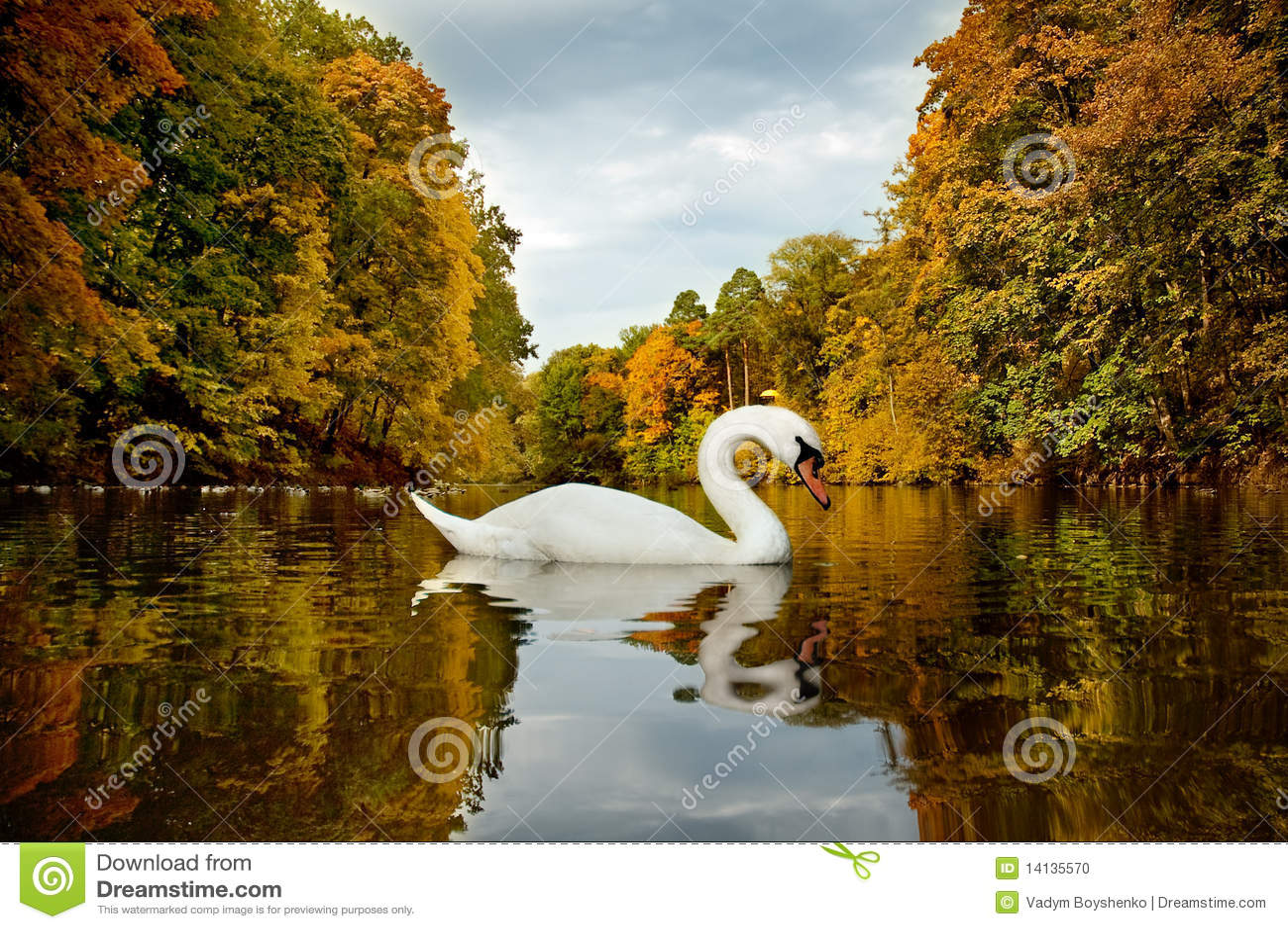 swan alexandria