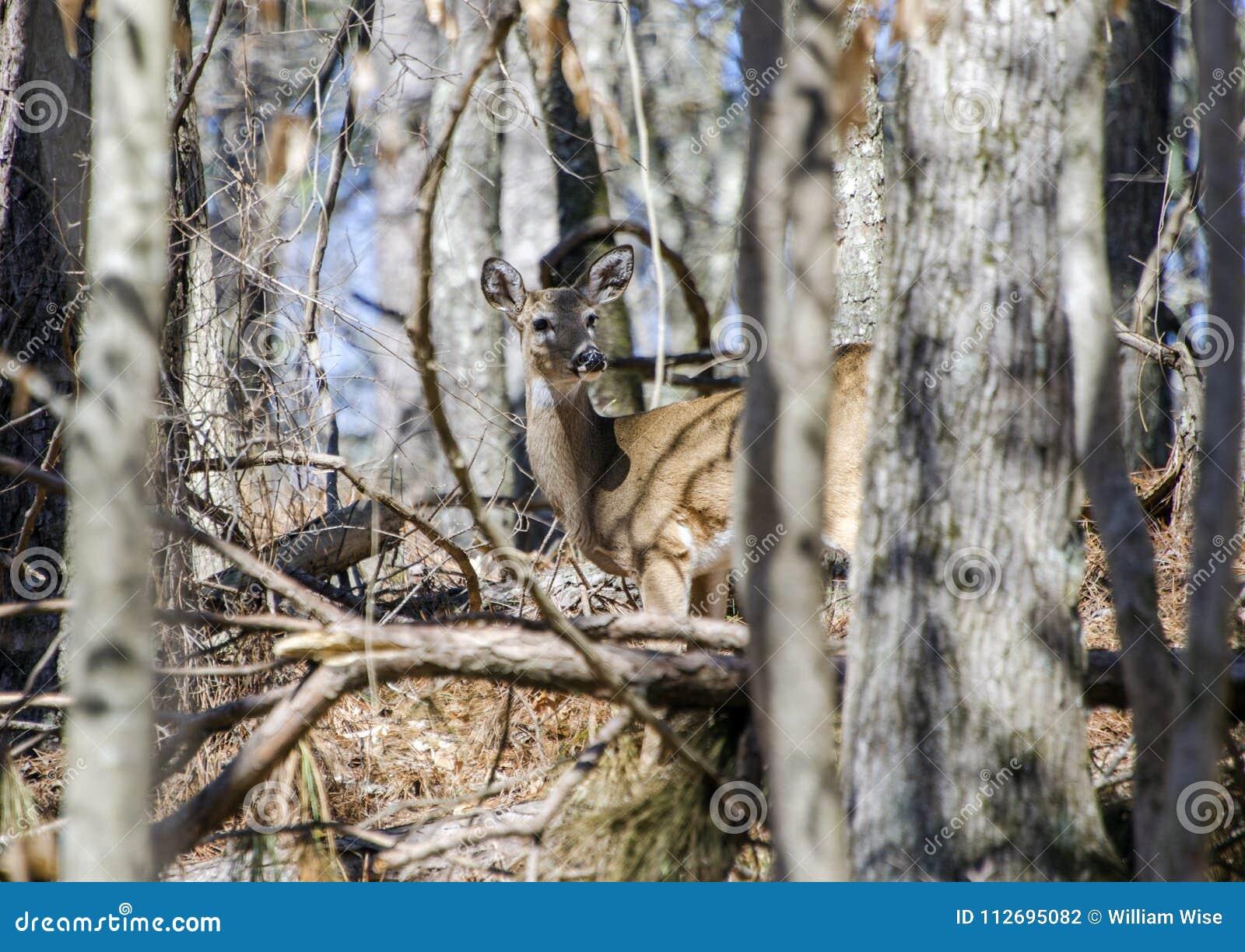 Hunt woods park