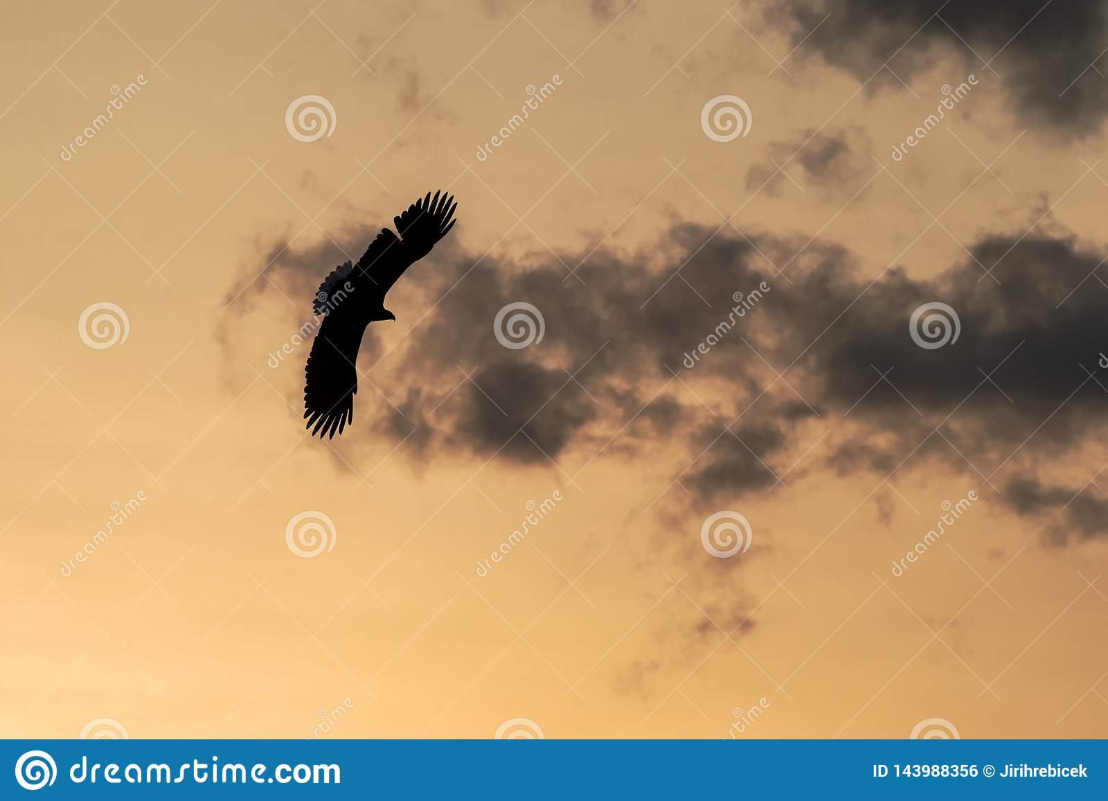 White-tailed eagle in flight, eagle flying against colorful sky with clouds in Hokkaido, Japan, silhouette of eagle at sunrise, ma