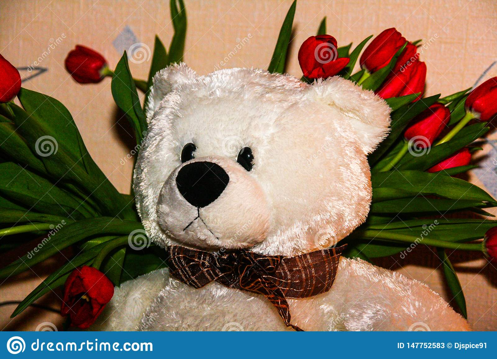 White Teddy bear on the background of red tulips