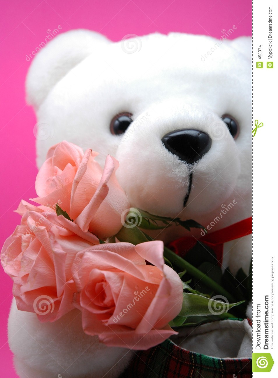 White teddy bear and pink roses