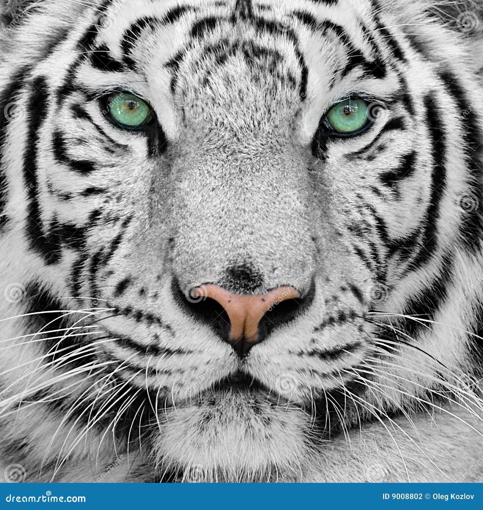 White Tiger Jennifer Ashley Epub
