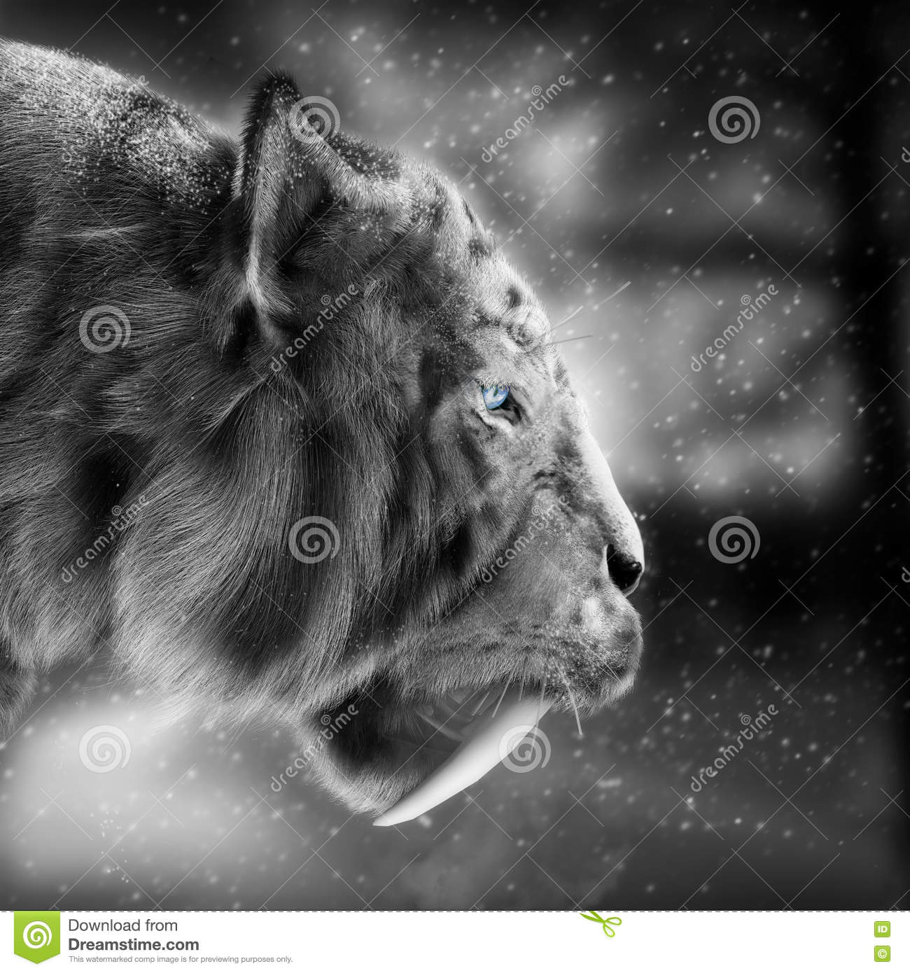 White tiger sabertooth stalking its pray with a snowing winter background .