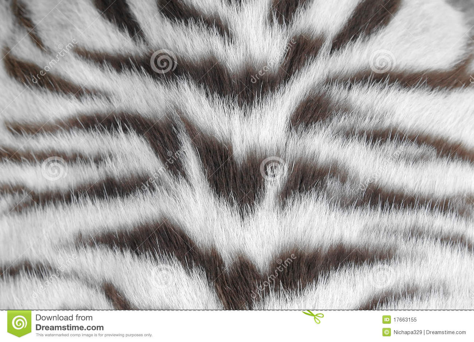 White Tiger Skin Royalty Free Stock Photo Image 17663155