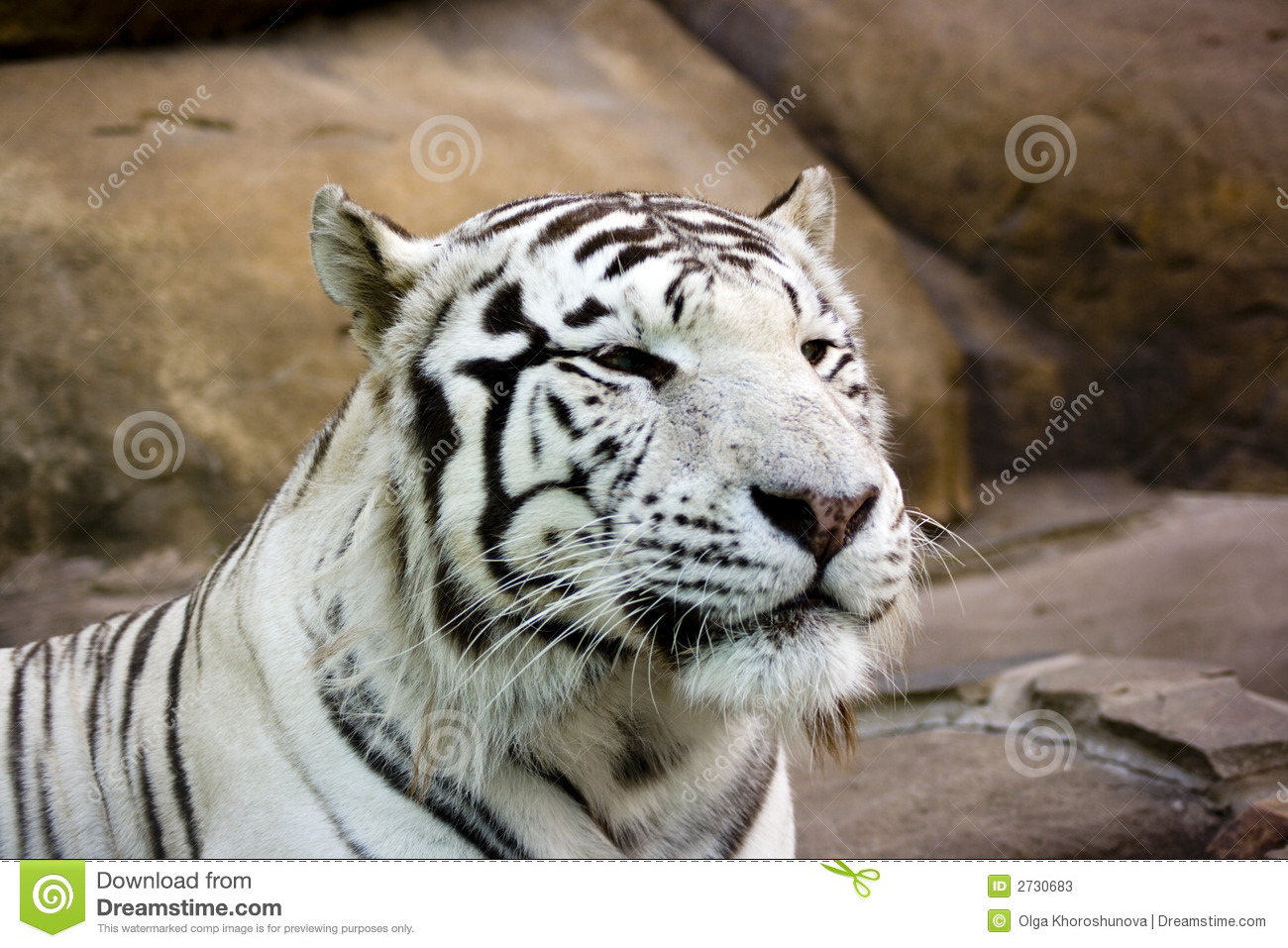 White Tiger Smiling Stock Photos - Image: 2730683