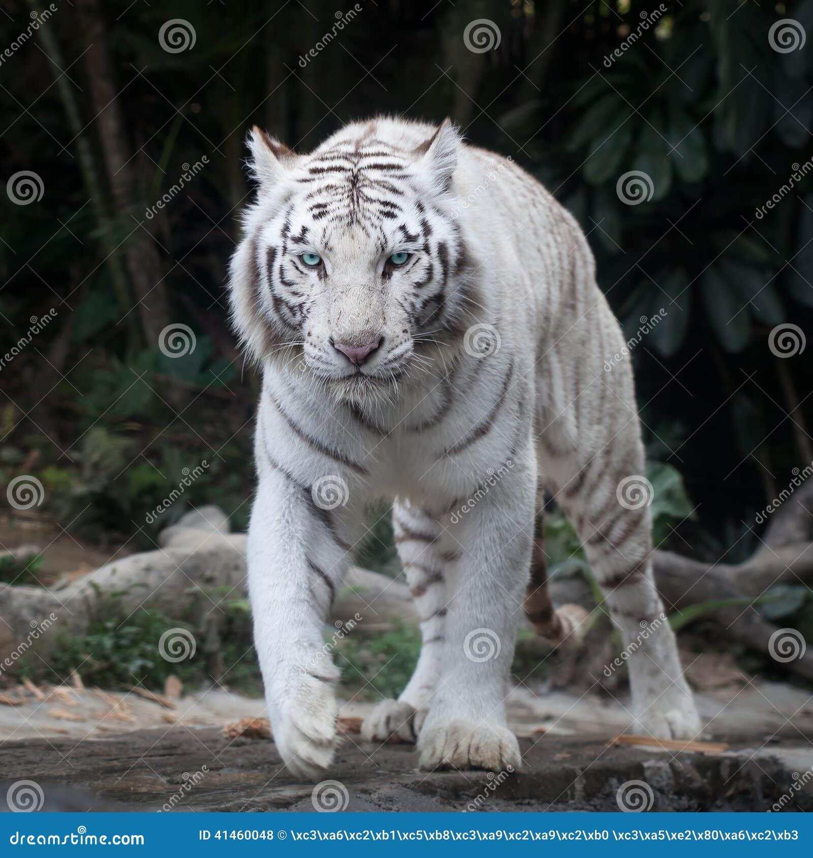 Funny Cat Videos For Kids Tigar