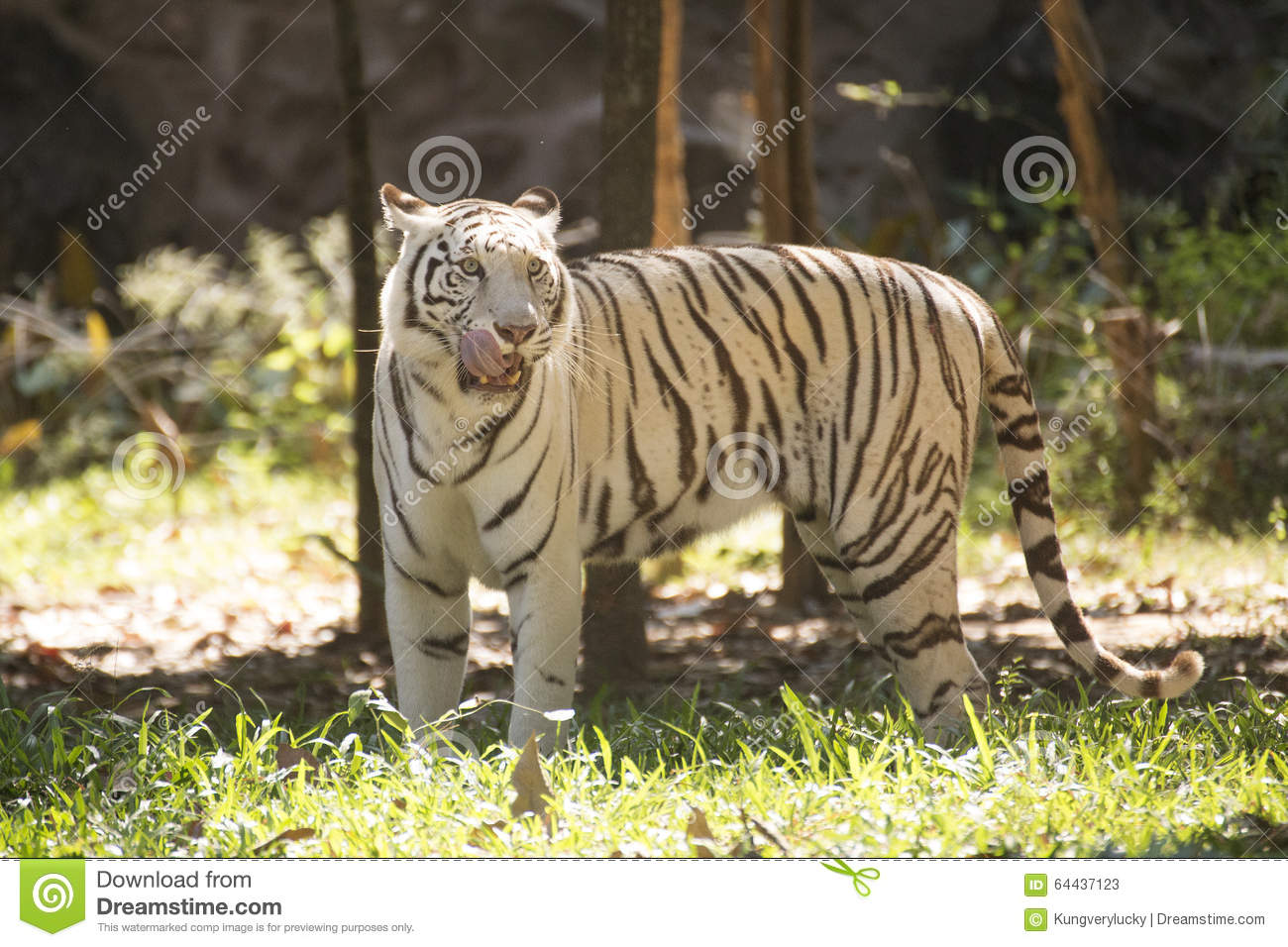The white tiger free download