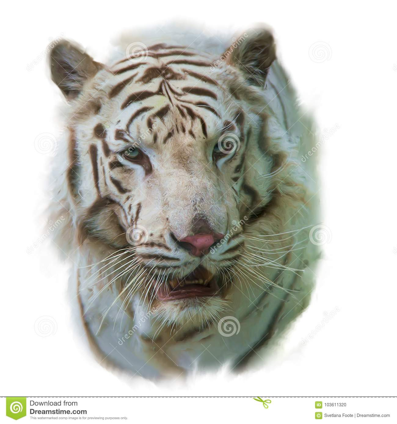 White Tiger Watercolor Painting Stock Photo - Image of