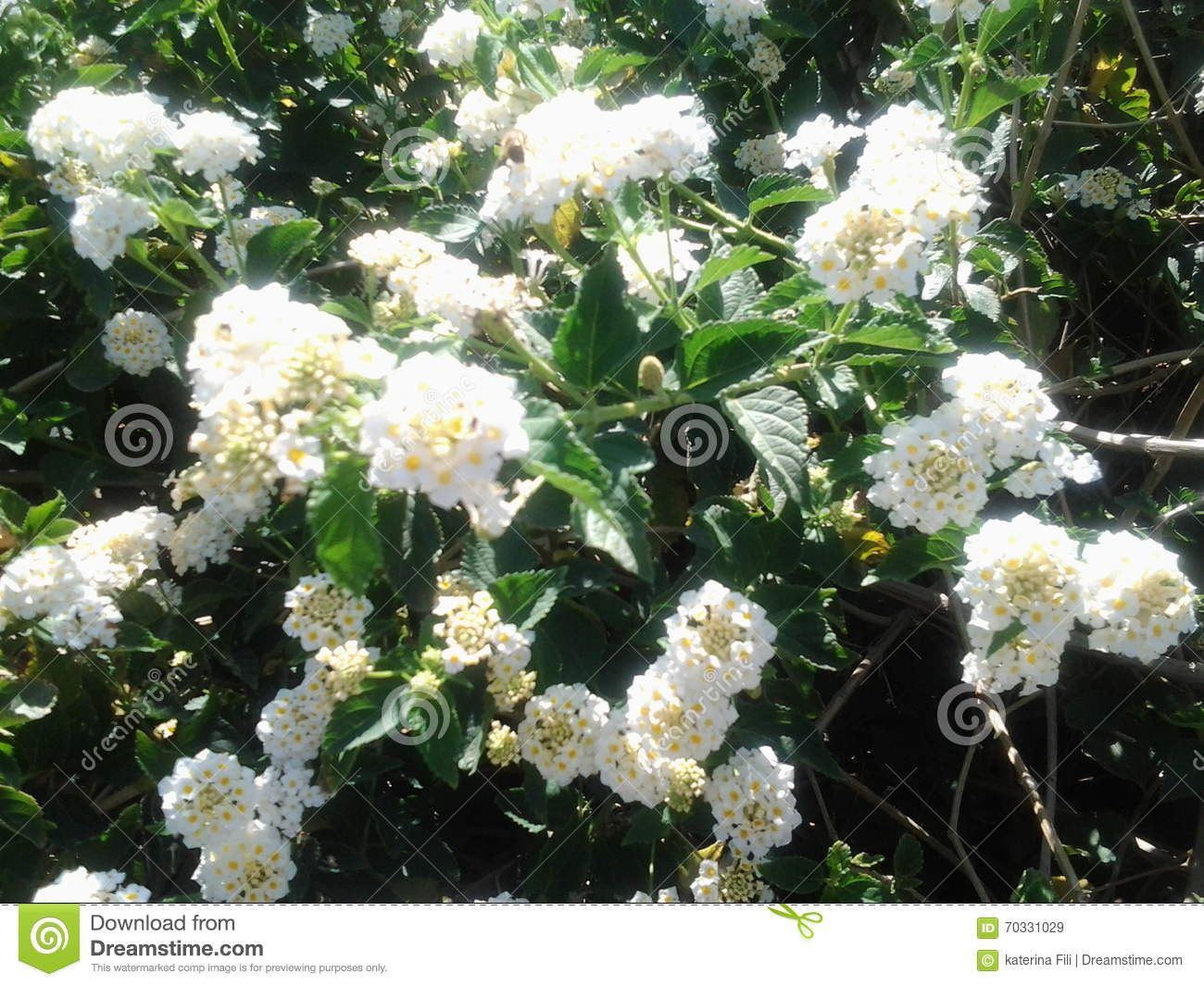 White Tree Flowers Spring Beautiful Sunshades Garden