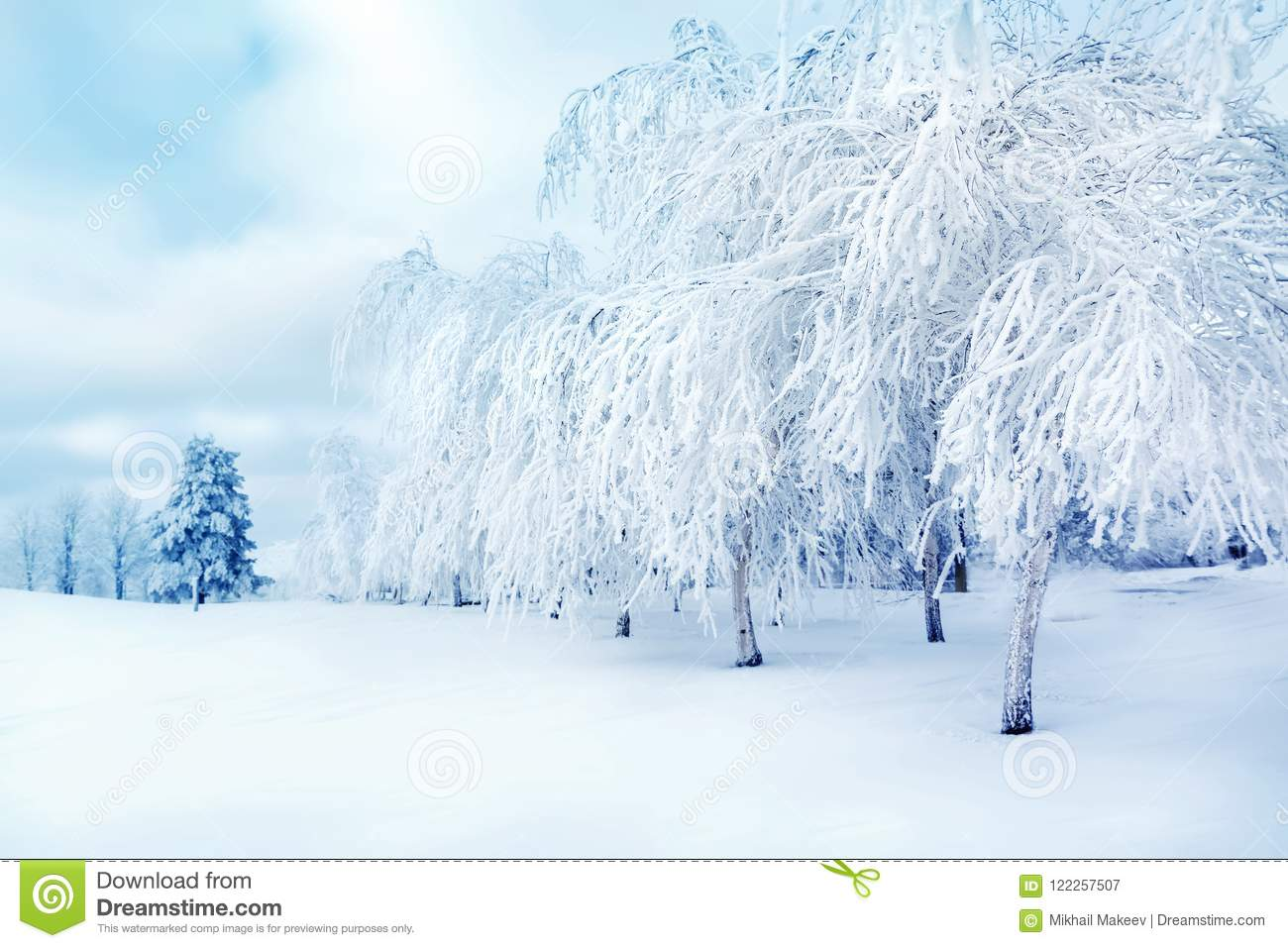 White trees in the snow in the city park. Beautiful winter landscape.