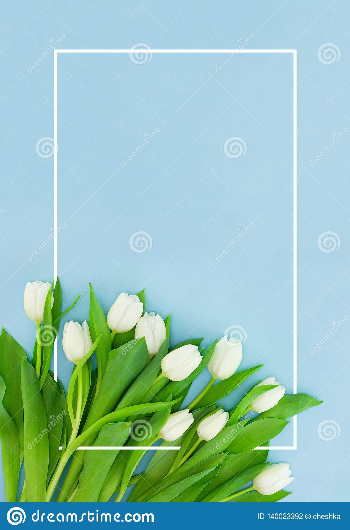 White tulips on blue background with frame, flower postcard for Women`s Day, Mother`s Day or sale concept. Floral spring