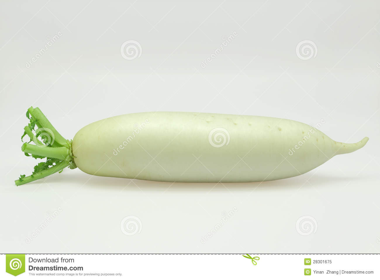 White Turnip Royalty Free Stock Photo - Image: 28301675
