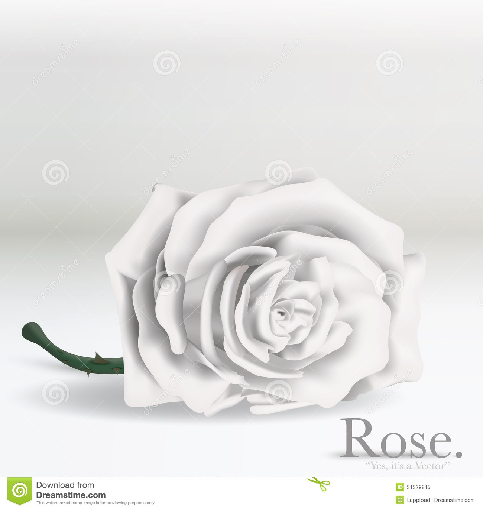 White Vector Rose Flower On Background Stock Vector - Illustration of gift, beautiful: 31329815