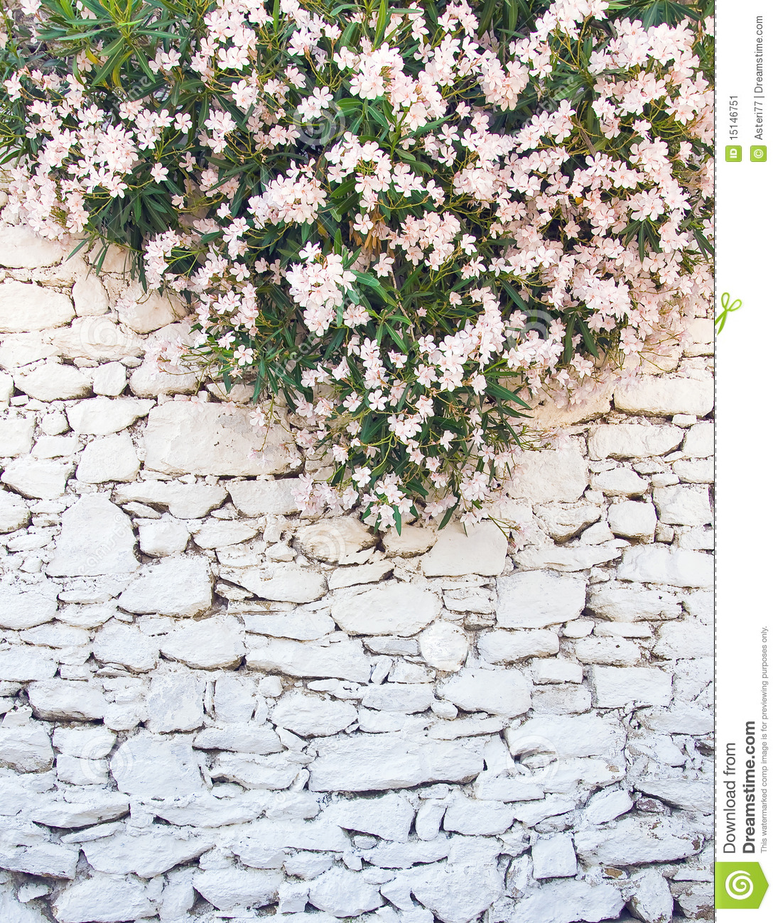 White washed Wall Rough Stone With Flowers Stock Image Image