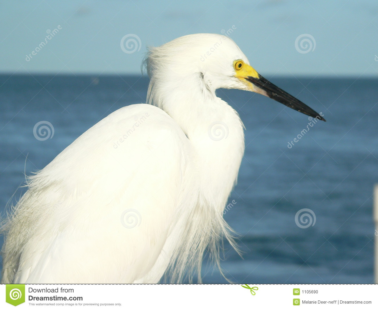 White Water Bird Stock Photo - Image: 1105690