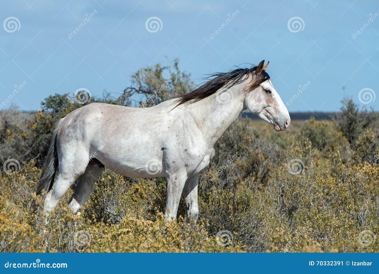 White Wild Horse On Blue Sky Background Stock Image Image Of Horses Beast 70332391