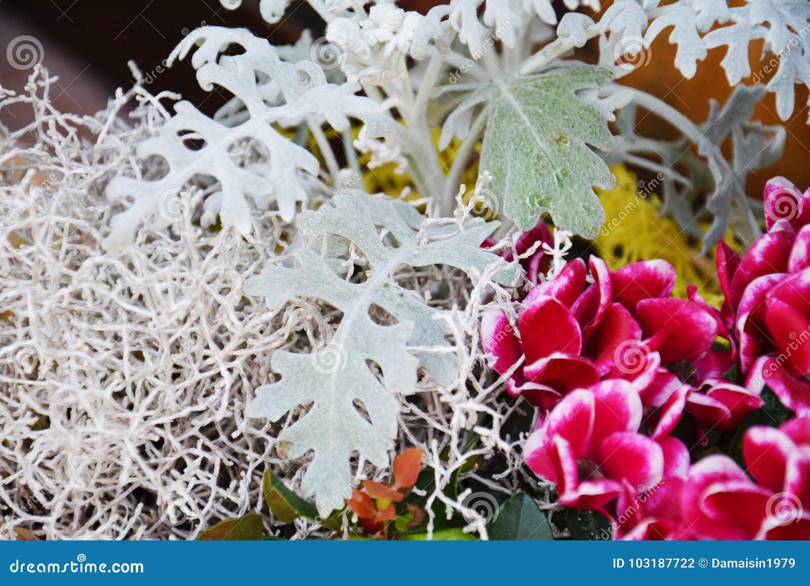 White Winter Flowers Natural Background Gardens Stock Photo