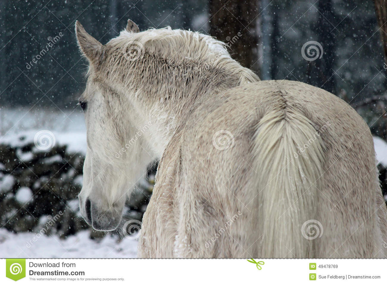 White Winter Horse