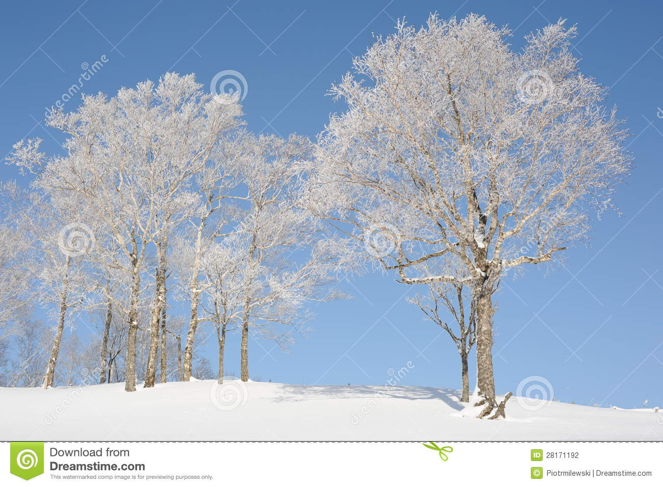 White Winter Landscape With A Snow Covered Tree Stock
