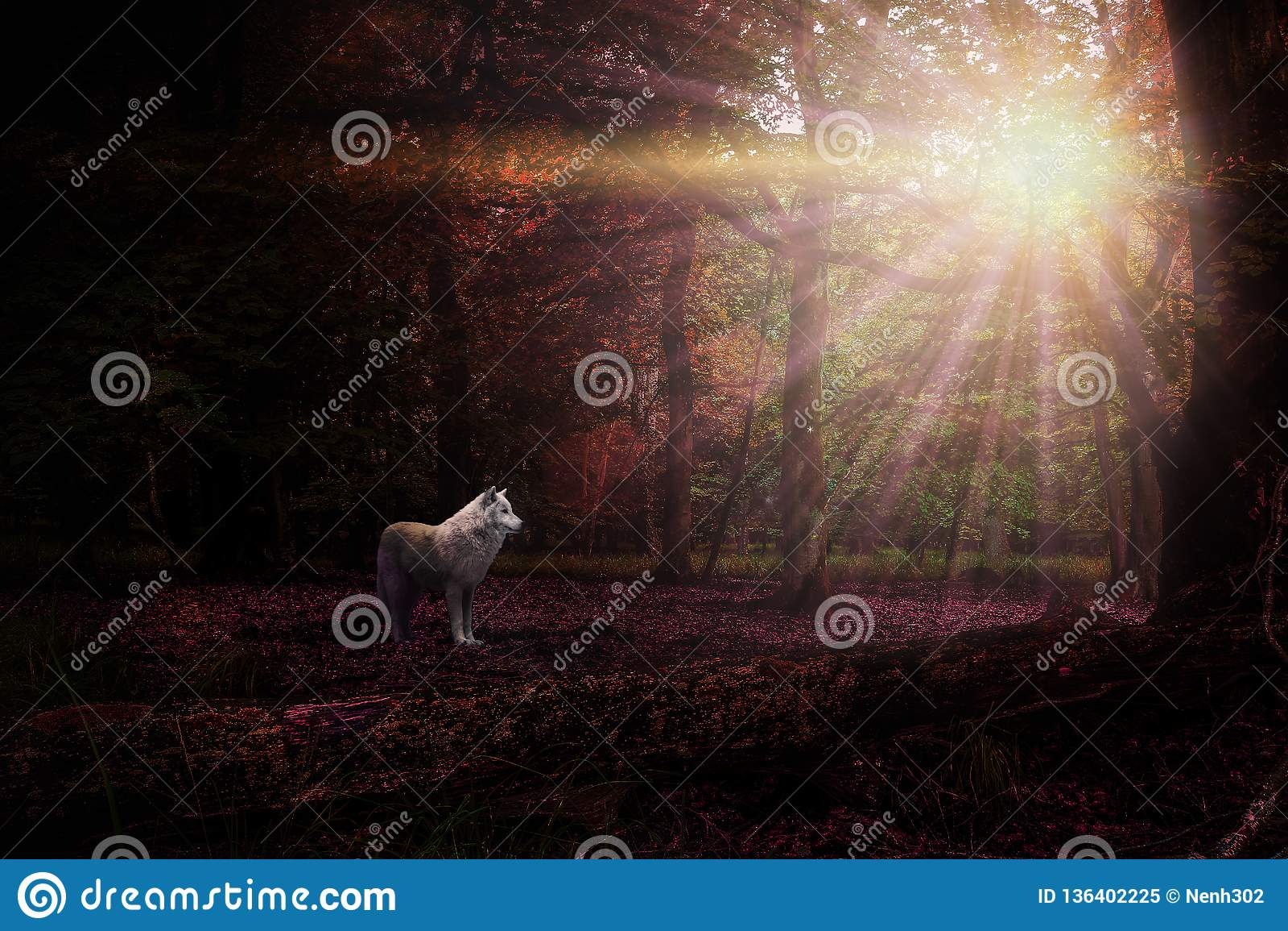 Purple White Mystical Wolf Www Sham Store