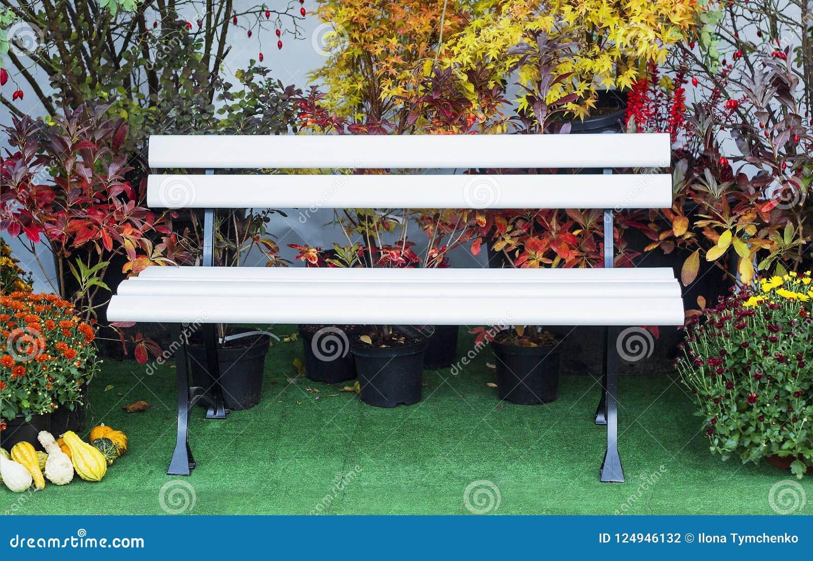 White Wooden Bench In Autumn Garden Near House Stock Photo Image Of Chrysanthemum Falling 124946132