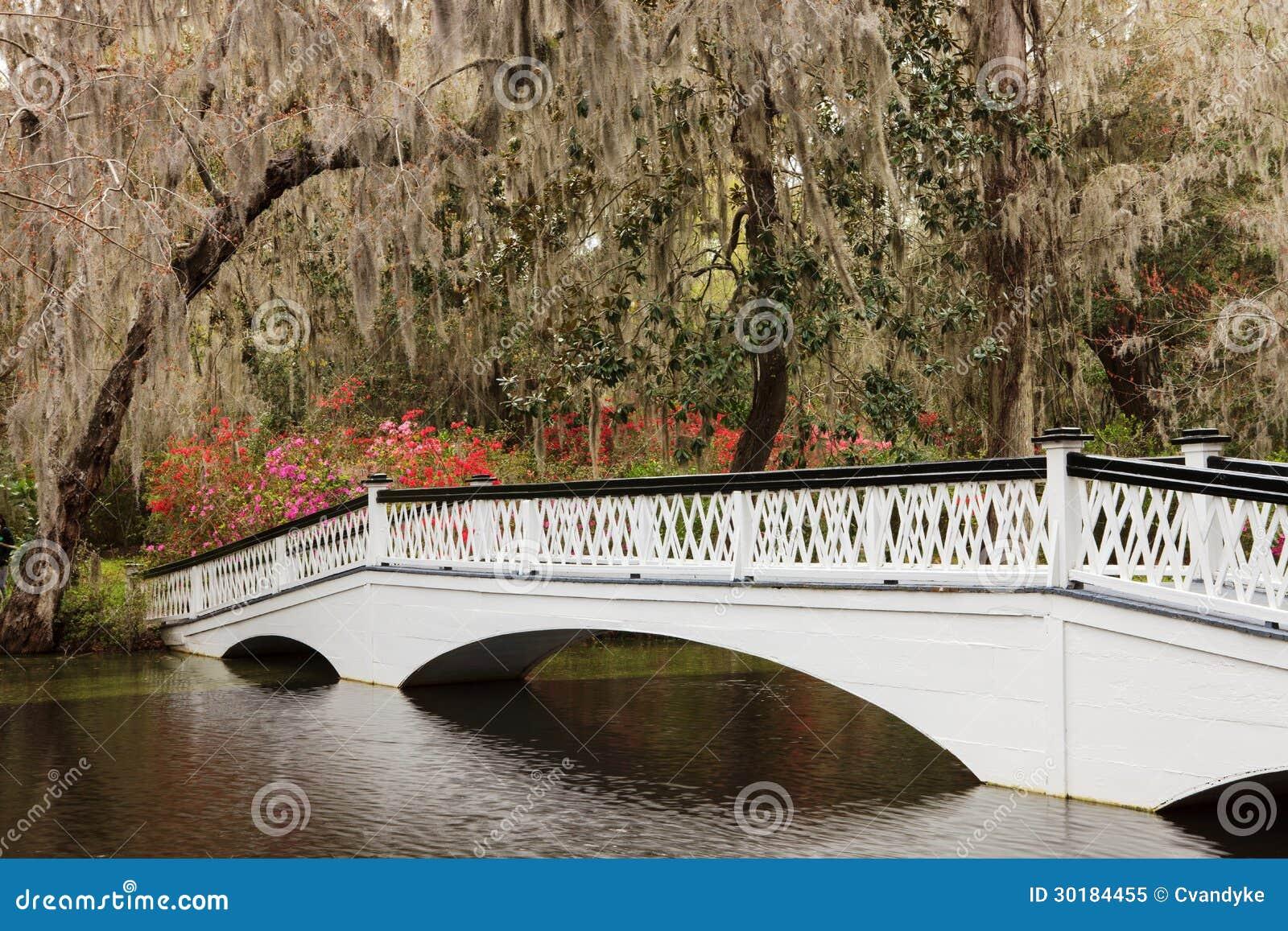 Ornamental White Bridge Magnolia Plantation SC Stock Image - Image ...