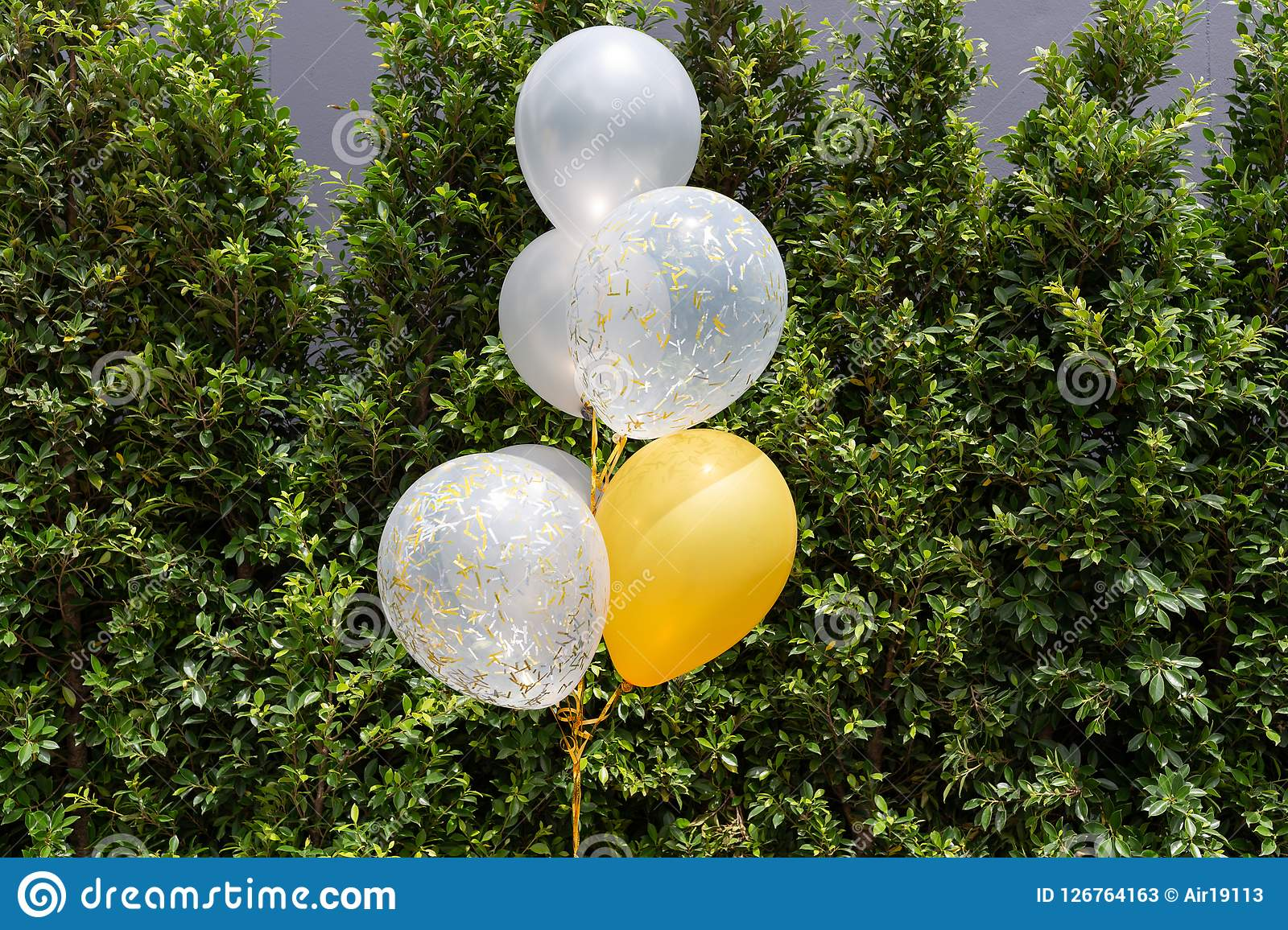 White and yellow balloons in party with tree background. White and yellow balloons with tree background Stock Photos