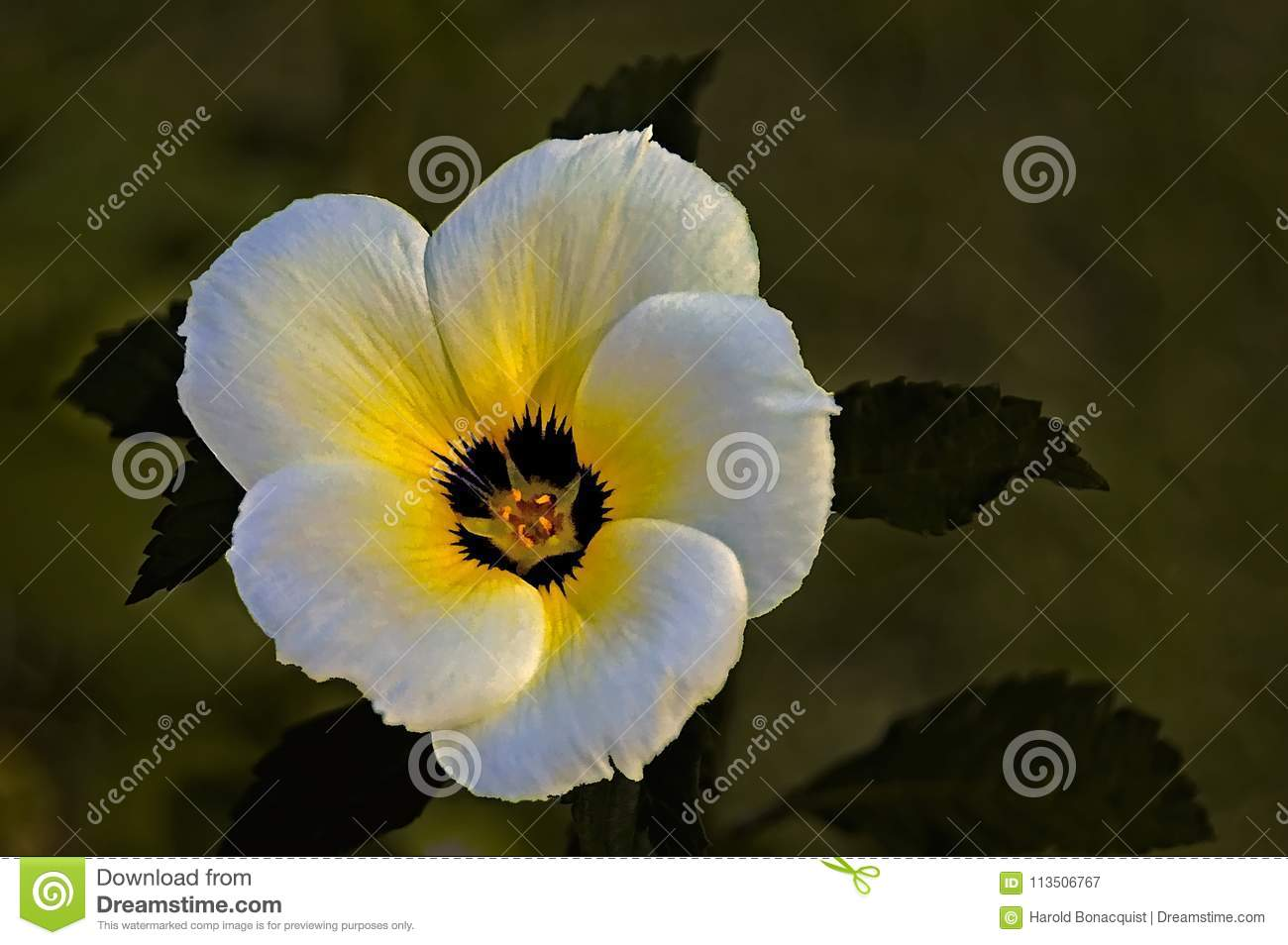 White And Yellow Flower Against Dark Background Stock Image Image